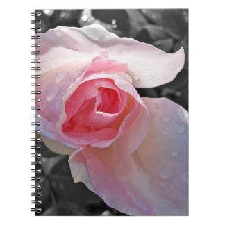 Color de rosa rosado de B&W Libros De Apuntes