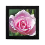 Color de rosa rosado del amor cajas de recuerdo