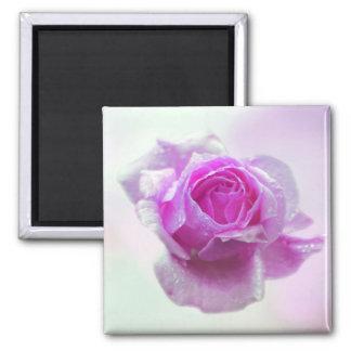 Color de rosa rosado del amor imán para frigorífico