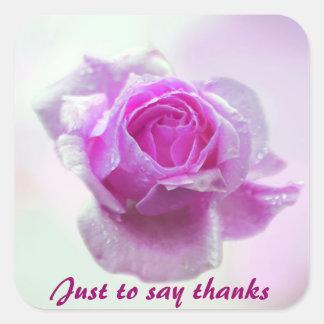 Color de rosa rosado del amor pegatina cuadrada