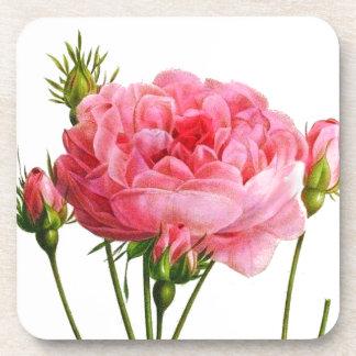 Color de rosa rosado del vintage - arte botánico posavasos