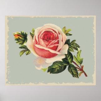 Color de rosa rosado del vintage impresiones