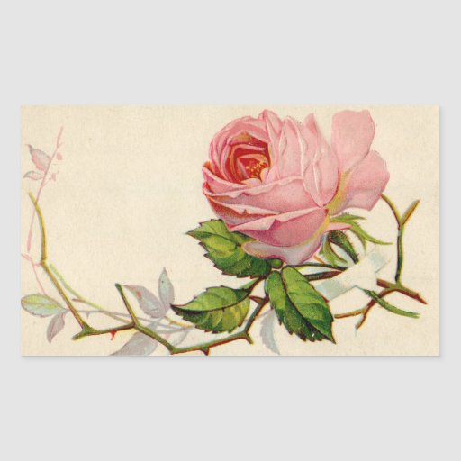 Color de rosa rosado del vintage pegatina rectangular