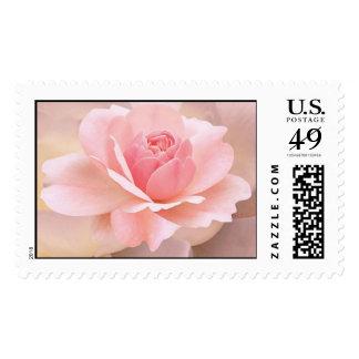 Color de rosa rosado delicado sello postal