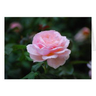 Color de rosa rosado delicado tarjeta de felicitación