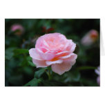 Color de rosa rosado delicado tarjeton
