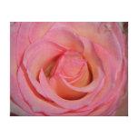 Color de rosa rosado detallado impresion en lona