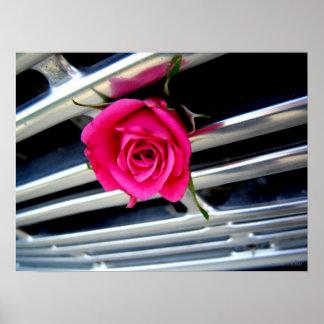 Color de rosa rosado en el poster de la parrilla