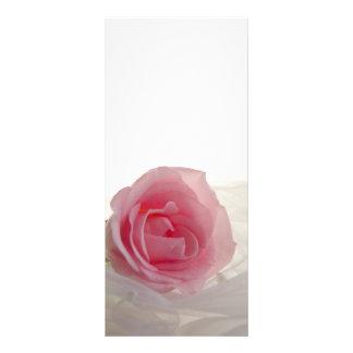 Color de rosa rosado en el programa blanco del bod plantillas de lonas