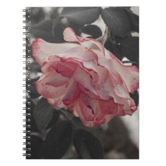 Color de rosa rosado en la foto blanco y negro del cuadernos