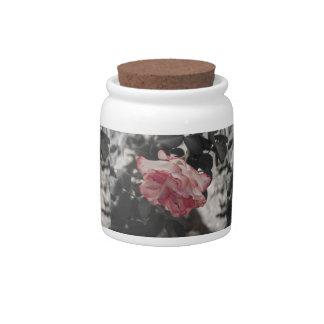 Color de rosa rosado en la foto blanco y negro del plato para caramelo