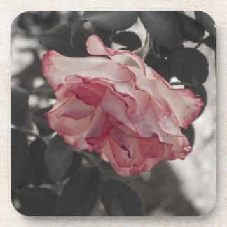 Color de rosa rosado en la foto blanco y negro del posavasos de bebida