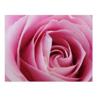 Color de rosa rosado en la lluvia tarjeta postal