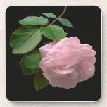 Color de rosa rosado en la plena floración posavasos de bebidas