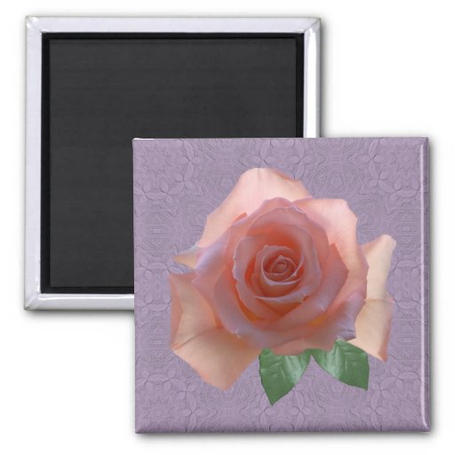 Color de rosa rosado en Lavendar Iman Para Frigorífico