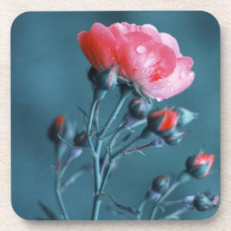 Color de rosa rosado en trullo posavaso