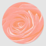 Color de rosa rosado etiqueta redonda