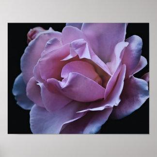 color de rosa rosado fantástico, con el borde azul poster