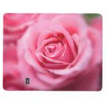 Color de rosa rosado hermoso