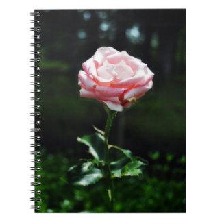 Color de rosa rosado hermoso spiral notebooks