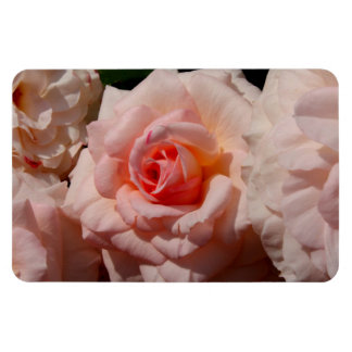 color de rosa rosado imanes rectangulares