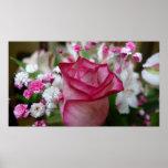 Color de rosa rosado impresiones