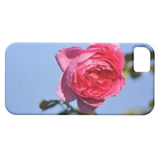 Color de rosa rosado iPhone 5 Case-Mate carcasas