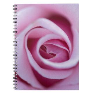 Color de rosa rosado libreta