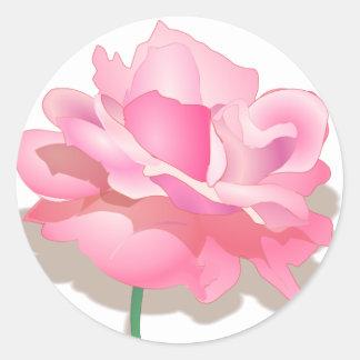 Color de rosa rosado lindo en la plena floración - pegatina redonda