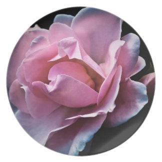 Color de rosa rosado magnífico en negro plato para fiesta