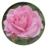 Color de rosa rosado magnífico plato para fiesta