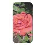 Color de rosa rosado oscuro iPhone 5 cobertura