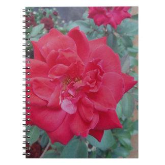 Color de rosa rosado oscuro rojo libro de apuntes con espiral