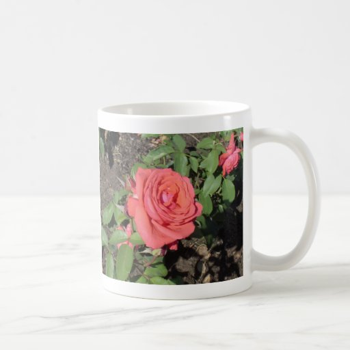 Color de rosa rosado oscuro taza