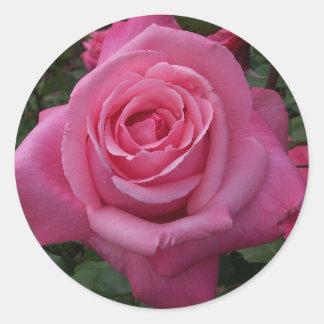 Color de rosa rosado etiqueta