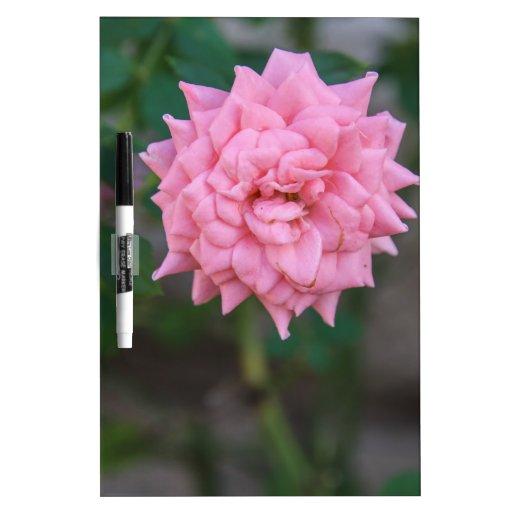 Color de rosa rosado pizarras blancas de calidad