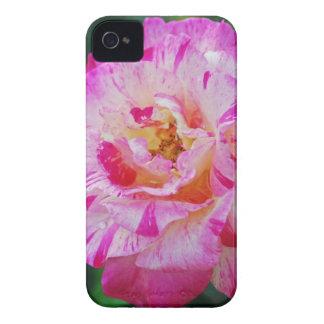 Color de rosa rosado rayado del caramelo iPhone 4 carcasas