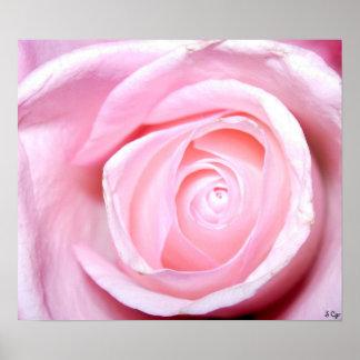 Color de rosa rosado, S Cyr Poster