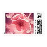 color de rosa rosado sello
