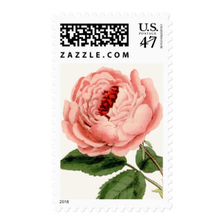 Color de rosa rosado sellos