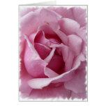 Color de rosa rosado tarjeta