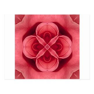 Color de rosa rosado tarjetas postales