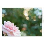 Color de rosa rosado tarjeton