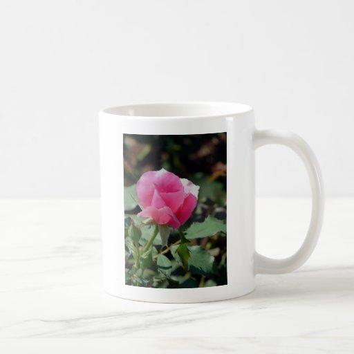 Color de rosa rosado tazas