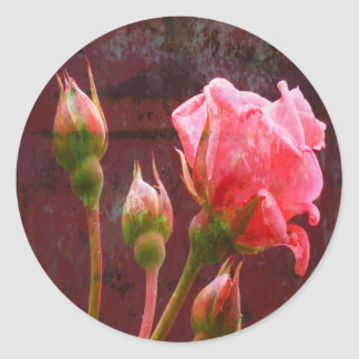 Color de rosa rosado texturizada y brote pegatina redonda