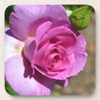Color de rosa rosado vibrante posavasos