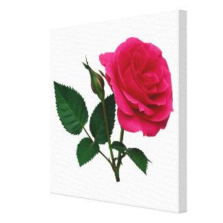 Color de rosa rosado y brote impresiones en lienzo estiradas