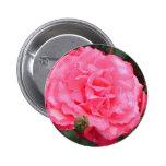Color de rosa rosado y rocío pin