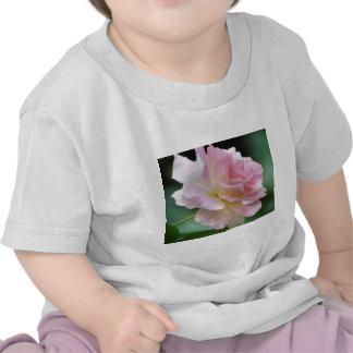 Color de rosa rosado y significado camisetas