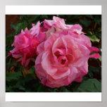 """""""Color de rosa rosados """" Impresiones"""